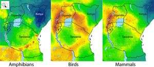 New Biodiversity Maps Will Help to Guide Conservation Measures in East Africa