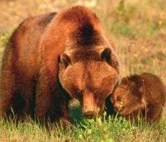 Reducing roads could boost bear population