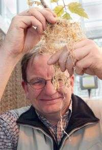 Soybean varieties viable in southern Indiana, resistant to root-knot nematode