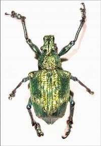 The Photonic Beetle