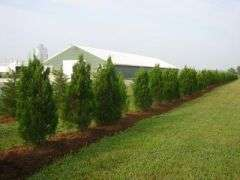 Trees kill odors and other emissions from poultry farms