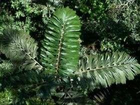 Yasuni Palm Crown