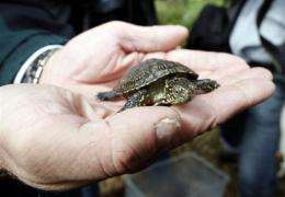 An Australian student has documented the country's first case of a captive-bred turtle acquiring an infectious disease