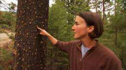 Forest ecologist sees climate consequences