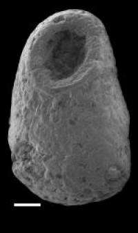 Geologist analyzes earliest shell-covered fossil animals