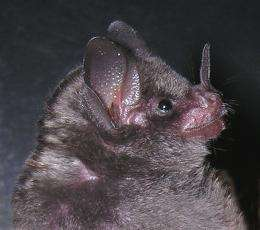 There is more to bats' vision than meets the eye