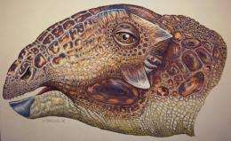 Team Discovers New Dinosaur Species From Montana