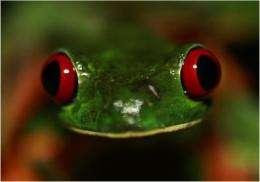 'McDonalization' of frogs