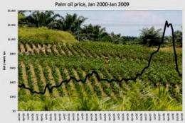 Smithsonian scientist warns that palm oil development may threaten Amazon