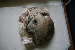 This handout photo received in September 2009 courtesy of the University of Connecticut (UConn) shows a skull fragment