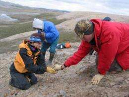 53 million-year-old high Arctic mammals wintered in darkness