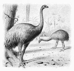 Giant bird feces records pre-human New Zealand