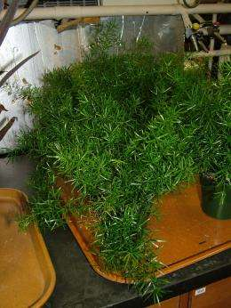Research shows some plants can remove indoor pollutants