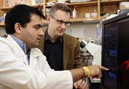 A cell's 'cap' of bundled fibers could yield clues to disease