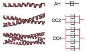 Alpha-Helical protein filaments