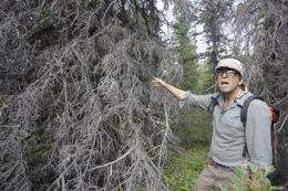 Beetles, wildfire: Double threat in warming world (AP)
