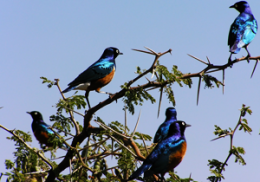 Biologist Shows Female Birds of a Feather Compete Together