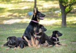 Clone puppies Trust, Solace, Prodigy, Valor and Dejavu