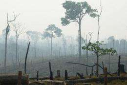 Deforestation causes 'boom-and-bust' development in the Amazon