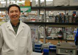 Dental researchers ID new target in fight against osteoporosis, periodontitis