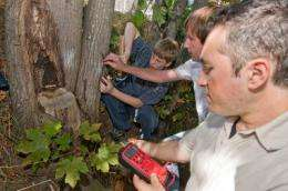 Electrical circuit runs entirely off power in trees