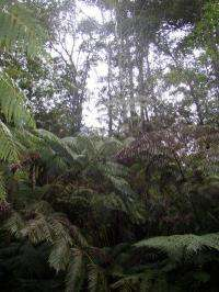 Exotic timber plantations found to use more than twice the water of native forests