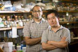 Finding the constant in bacterial communication