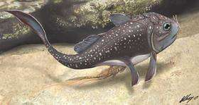 Fossil fish shows oldest live birth