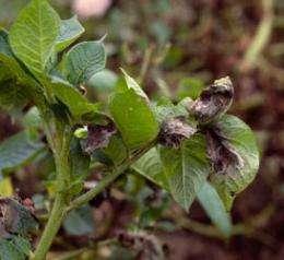 Genome of Irish potato famine pathogen decoded