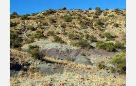 Geologic Findings Undermine Theories of Permian Mass Extinction Timing