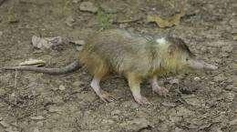 Researchers help save rare venomous mammal from extinction