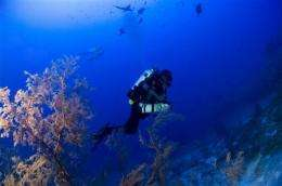 Hawaii researchers explore previously unseen coral (AP)