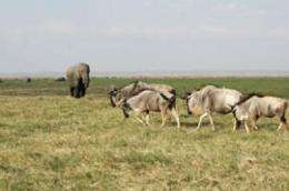 Kenya's national parks not free from wildlife declines