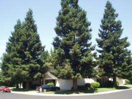 New Study: Home Energy Savings Are Made in the Shade