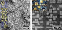 Scientists Fabricate Organic Transistor with Improved Performance