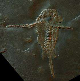 Origin of claws seen in 390-million-year-old fossil