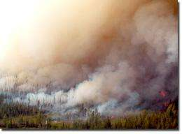 Plants may affect the effect of wildfires