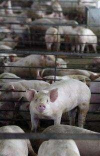 Pressure rises to stop antibiotics in agriculture (AP)