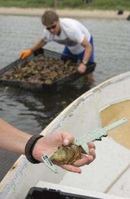 Rising acidity levels could trigger shellfish revenue declines, job losses