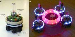 Robots Reveal Insights into Evolution