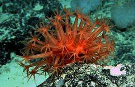 Scientific submersible makes deep-sea discoveries