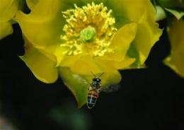 Survey finds slower decline of honeybee colonies (AP)