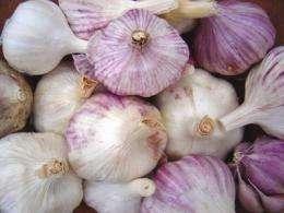 Sustainably grown garlic