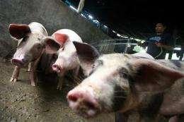 Swine flu name change? Flu genes spell pig (AP)