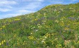 Theory provides more precise estimates of large-area biodiversity