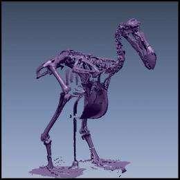The way of the digital dodo