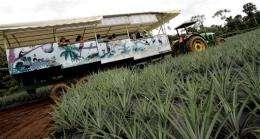 """Tourists enjoy a """"Pineapple Tour"""" in Costa Rica"""