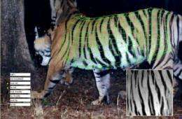 Tracking tigers in 3-D