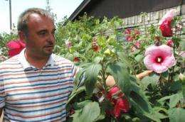 Unique winter-hardy hibiscus has roots with AgriLife Research scientist in Vernon