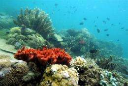 WWF said climate change could wipe out the world's richest ocean wilderness by the end of the century